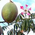 ядовитое дерево 5 букв - фото 10